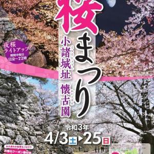 【懐古園】今年ももうすぐ桜です。