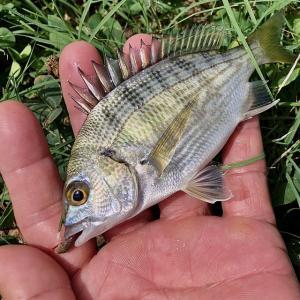 【 ハゼ釣りは釣り人を救う 】