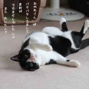 更新間に合わず(・・;)