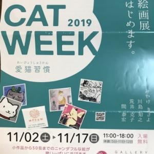 荒井先生の猫の絵画展