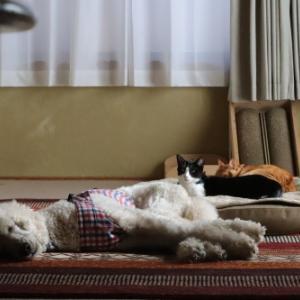 猫さま優先ベッド
