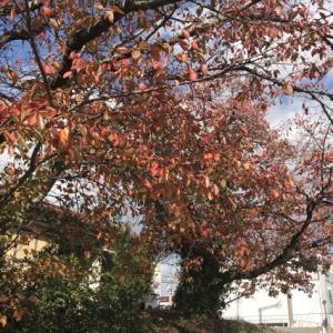 お散歩の秋