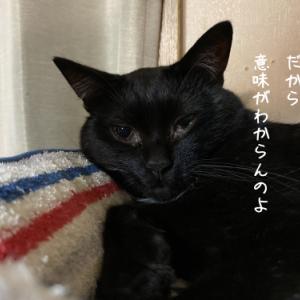 プロジェクトM 関わりたくない猫 しーちゃん