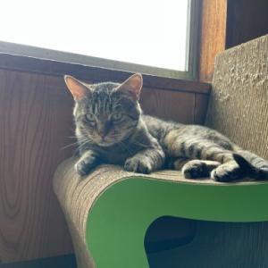 みの猫みのちゃん やっぱりかわいいみのちゃん