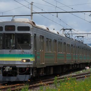 続・ローカル駅点描 キバナコスモス咲く武州中川にて