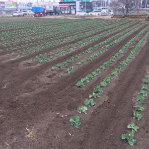 今年の一発目の畑3枚