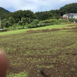 大根の予定の畑