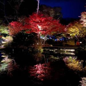 ライトアップされた美しい庭園へ