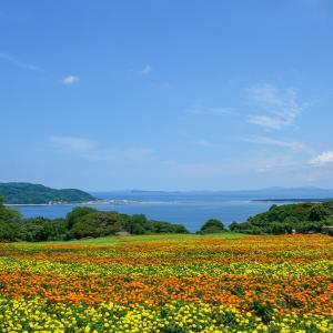 Visite du parc de l'île Nokonoshima en été