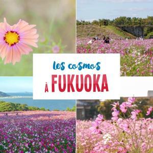 [Fukuoka] 5 endroits pour profiter des cosmos