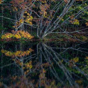 秋の池 3