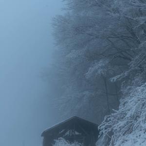 かみ雪と霧の朝