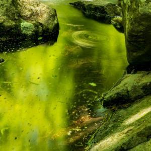 緑のクルクル