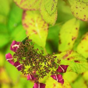 秋の色 3