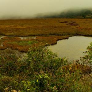 八島の秋 2