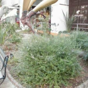 大阪。アメリカ村。BIGSTEPの植栽とか
