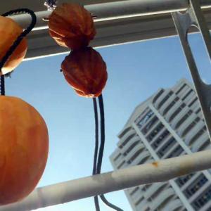 秋空に柿を干してみると…