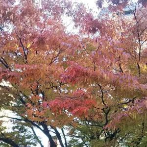 平和大通りの秋彩りと平和のバラ