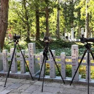 出羽三山神社でアカショウビンに出会った。
