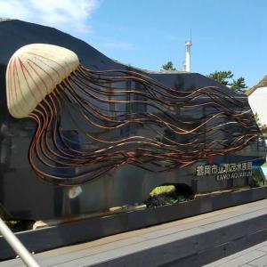 ふわふわクラゲ 加茂水族館