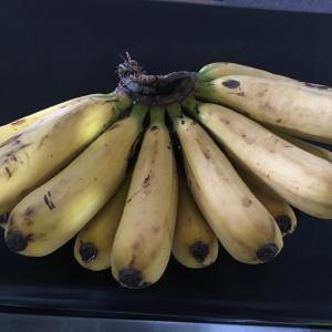 オーガニックバナナ