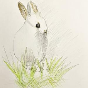 8歳娘が描いたウサギの絵