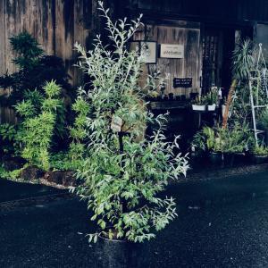 today's plants