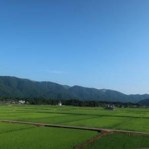 早朝の奥びわ湖と宿場町の清流に咲く可憐な水草
