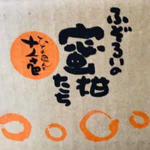 熊本県 清香園さん ふぞろいの蜜柑たち