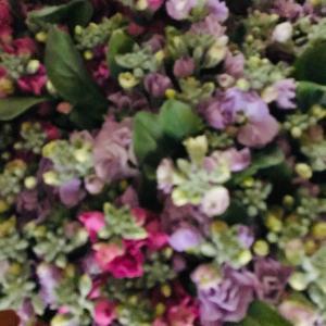 今年もストックの花の季節が始まりました。