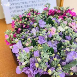 今年も、ストックの花の季節です。