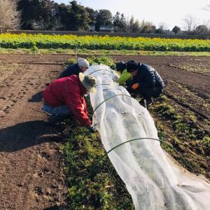 青空の下、みんなで農作業。野菜栽培をより身近に日常に
