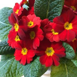 季節の花 鉢植えの花も色とりどり