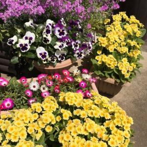 プランターの季節の花々も花盛り