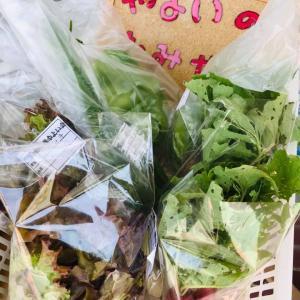 NPO法人いすみライフスタイル研究所 今日は野菜の納品日。