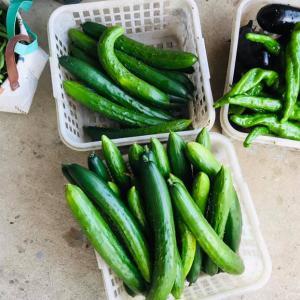 田舎はたけ時間 両親の野菜づくり、旬の野菜大収穫