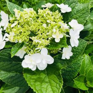 田舎おうち時間 季節の花々
