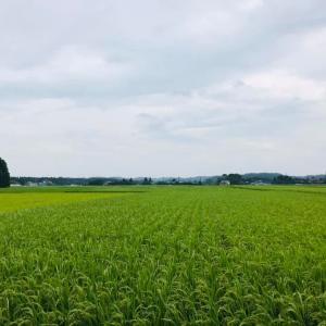 田園風景も色の変化 稲穂