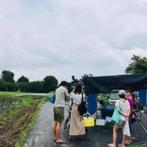 天候不順、畑イベントできませんでしたが、畑でお野菜販売
