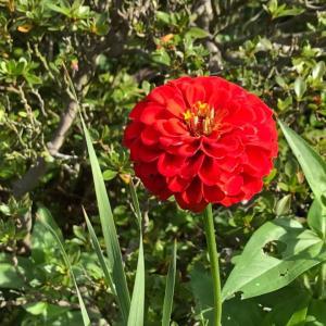 田舎おうち時間 季節の花々 新しい花が咲きました。