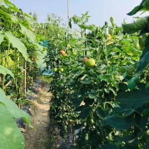 田舎はたけ時間 夏野菜 大賑わい
