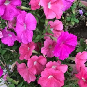 田舎おうち時間 初秋 季節の花々