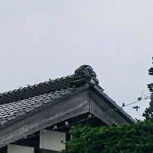 田舎おうち時間 電線や屋根にすずめさん集合