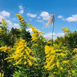 田舎はたけ時間 季節の野の花 秋