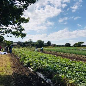 【いラ研】「オーガニック農園で野菜と生き物にふれよう」サツマイモ大収穫