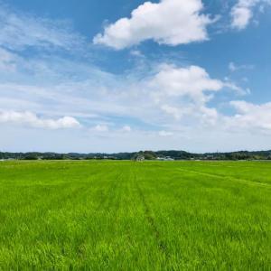 田舎時間 稲も生長、緑一面の田園風景に