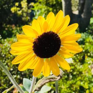 いすみ暮らし 田舎おうち時間 夏本番 季節の花々