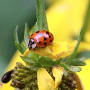 昆虫色々、paet8。。。
