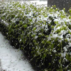 室外機の雪対策をしないと、まとまった雪が降る法則