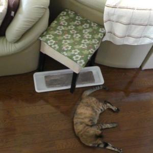 IKEAのスツールと猫の爪とぎケースを合体